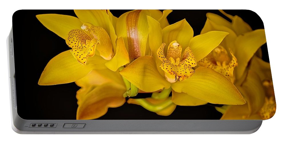 Flower Of The Day Portable Battery Charger featuring the photograph Cymbidiums On Black by Jade Moon