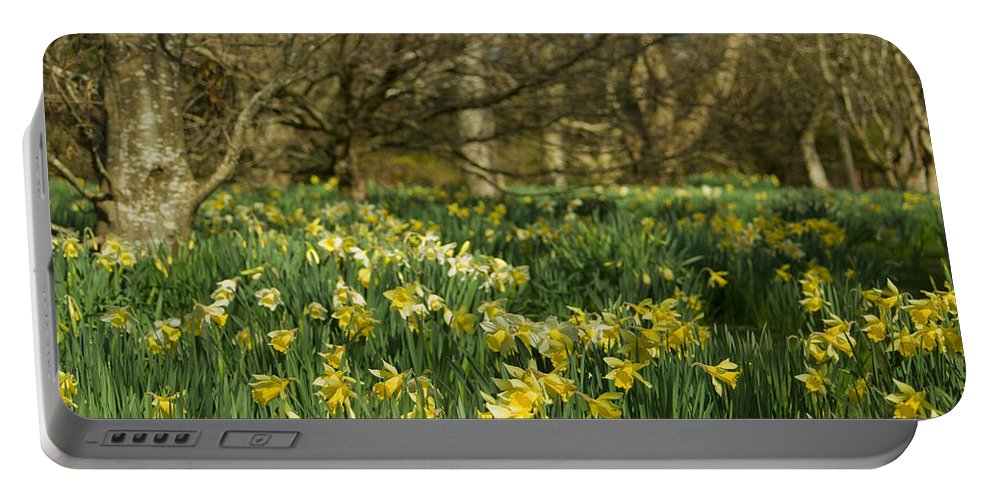 Daffodils Portable Battery Charger featuring the photograph Daffodil Field by Beverly Cash