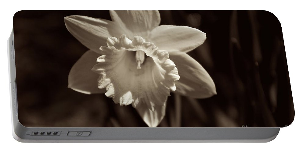 Black And White Portable Battery Charger featuring the photograph Daffodil In Black And White by William Norton