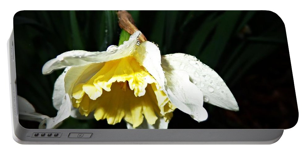 Flower Portable Battery Charger featuring the photograph Daffodil In The Rain 2 by Jannice Walker