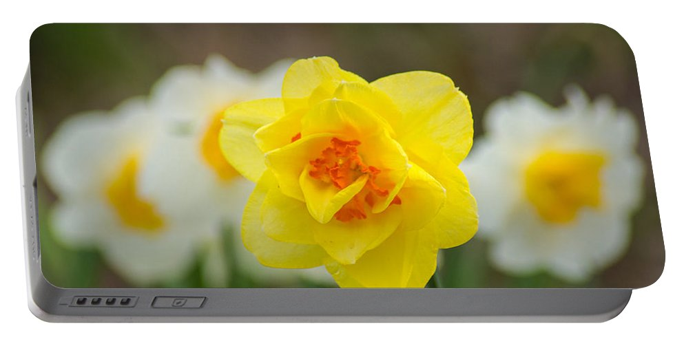 White Portable Battery Charger featuring the photograph Daffodil Standout by Bill Pevlor