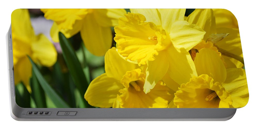Yellow Portable Battery Charger featuring the photograph Daffodils by Linda Kerkau