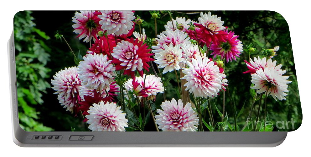 Dahlia Portable Battery Charger featuring the photograph Dahlia Love by Jaunine Roberts