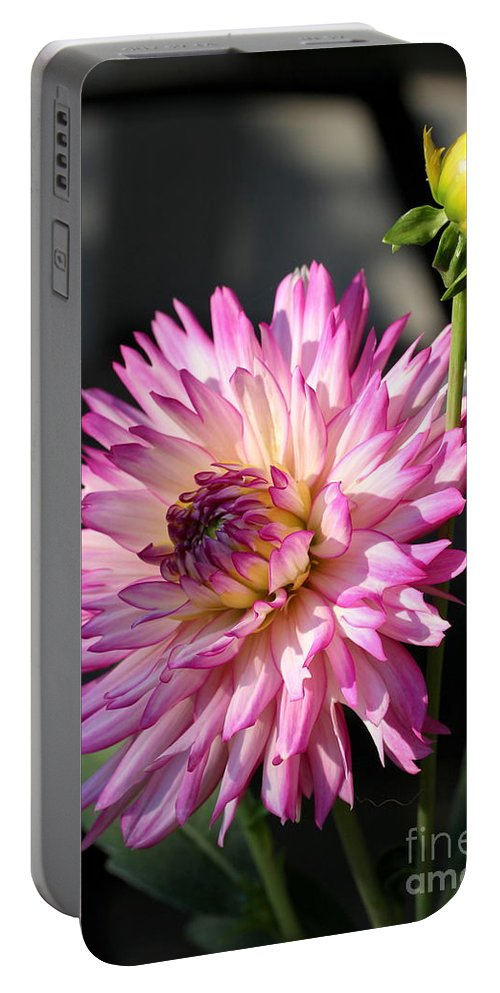 Dahlia Portable Battery Charger featuring the photograph Dahlia Generations by Kenny Glotfelty