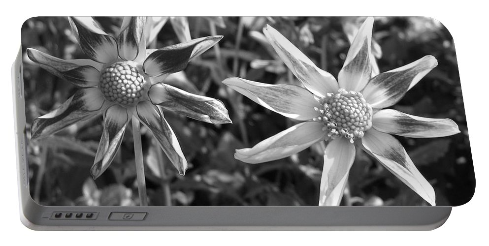 Dahlia Portable Battery Charger featuring the photograph Dahlia Named Amy's Star by J McCombie