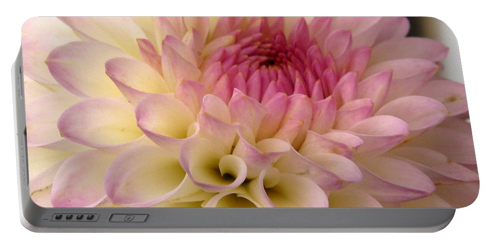 Dahlia Portable Battery Charger featuring the photograph Dahlia Named Brian's Dream by J McCombie