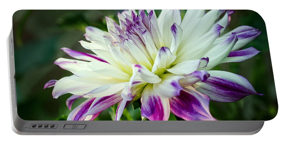 Dahlia Portable Battery Charger featuring the photograph Dahlia No. 2173 by Georgette Grossman
