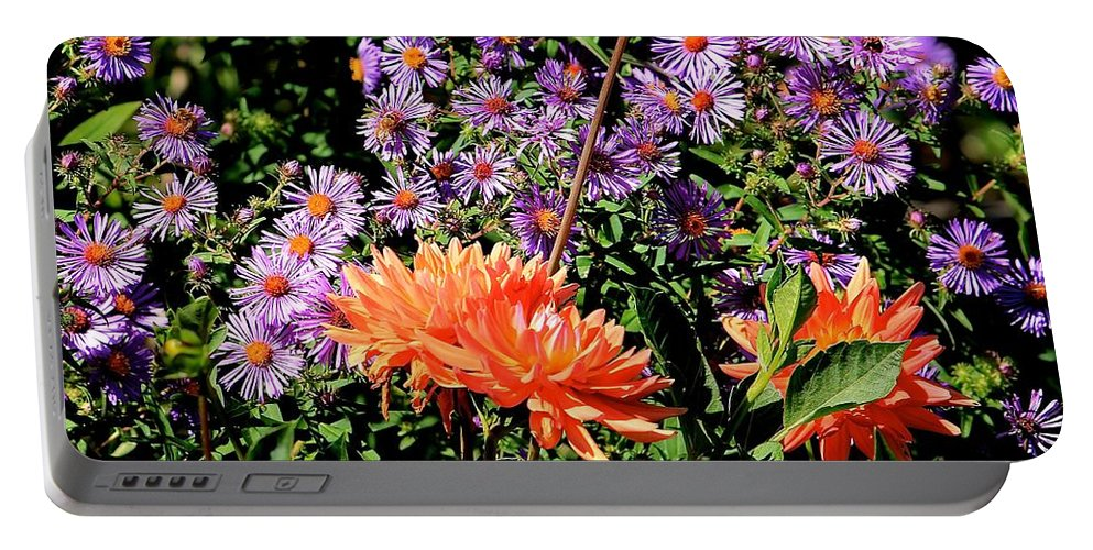 Dahlias Portable Battery Charger featuring the photograph Dahlias And Asters by Michael Saunders