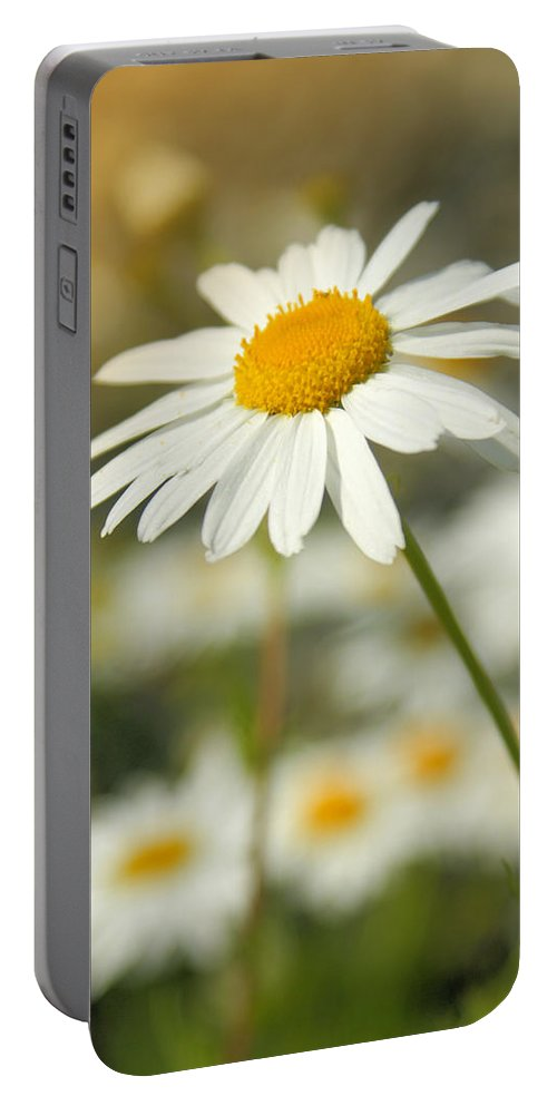 Daisy Portable Battery Charger featuring the photograph Daisies ... Again - Original by Variance Collections