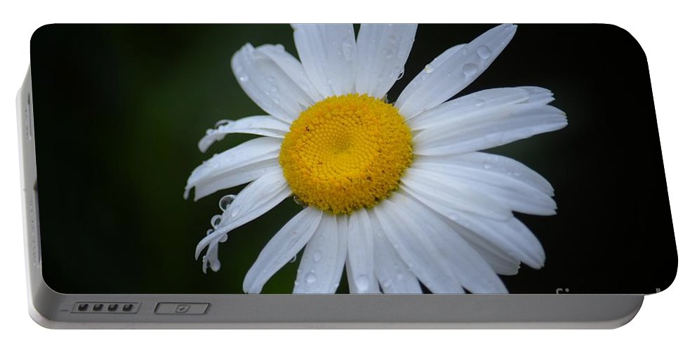Daisy 14-3 Portable Battery Charger featuring the photograph Daisy 14-3 by Maria Urso
