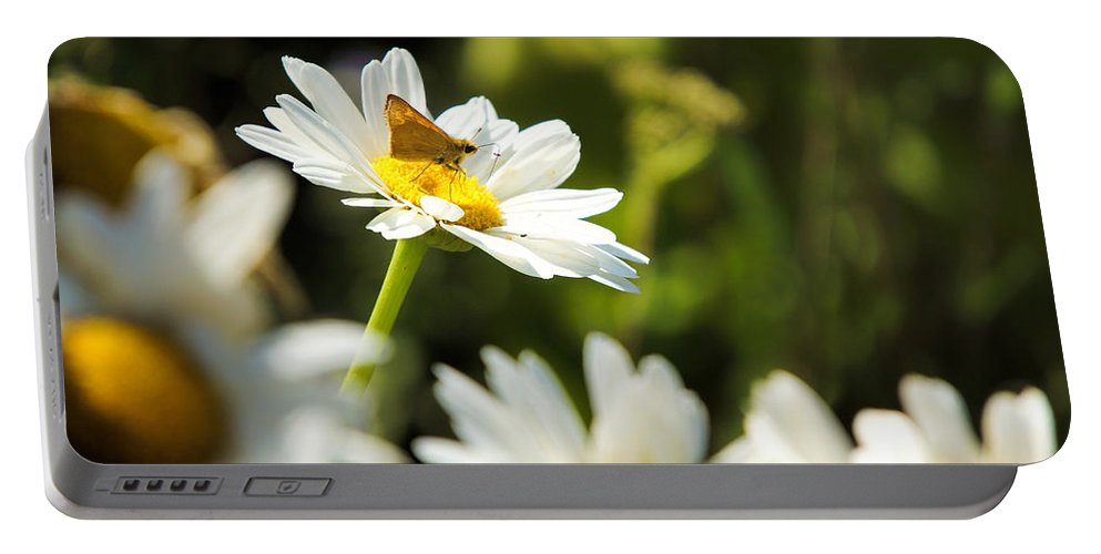 Flower Portable Battery Charger featuring the photograph Daisy by Alan Hutchins