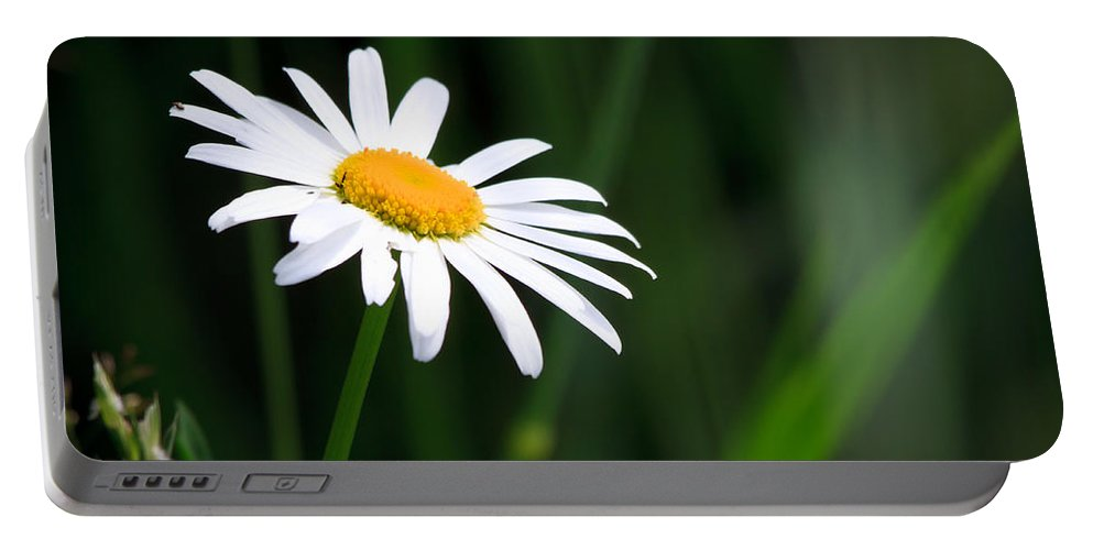 Flower Portable Battery Charger featuring the photograph Daisy - Bellis Perennis by Bob Orsillo
