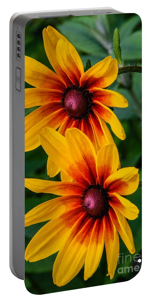Daisy Portable Battery Charger featuring the photograph Daisy Duo by Grace Grogan