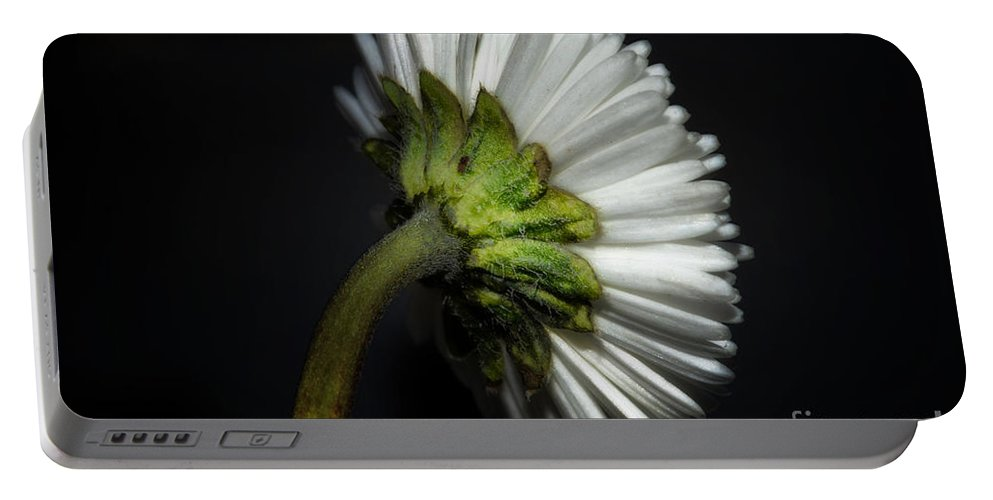 Flower Portable Battery Charger featuring the photograph Daisy Flower by Mats Silvan