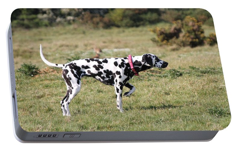 Dalmatian Pretending To Be A Pointer Portable Battery Charger featuring the photograph Dalmation Pretending To Be A Pointer by Gordon Auld