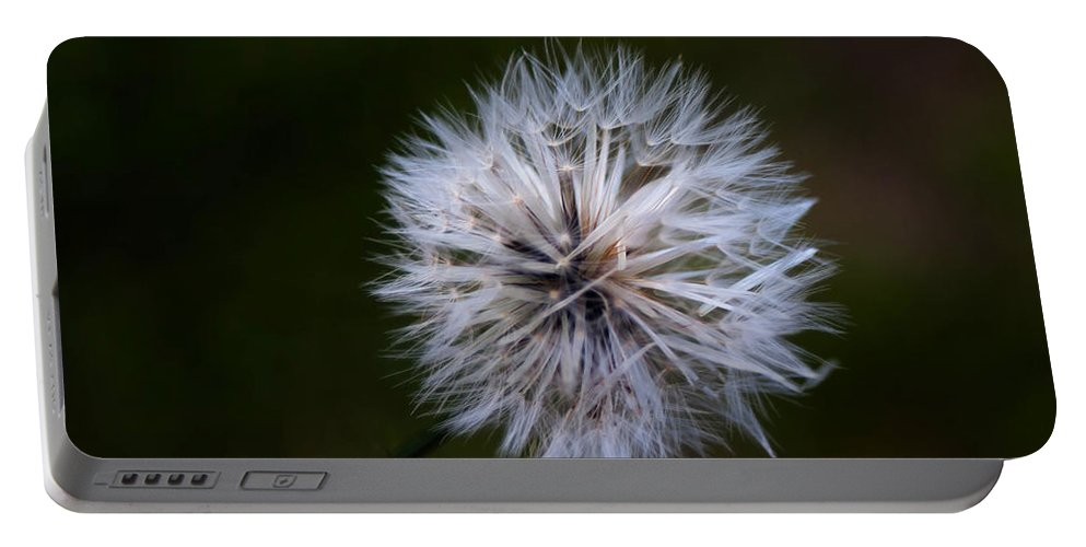 Dandelion In Green Portable Battery Charger featuring the photograph Dandelion In Green by Mechala Matthews