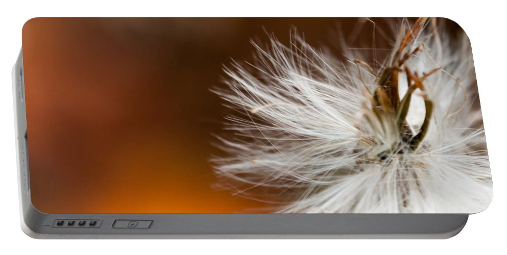 Optical Playground By Mp Ray Portable Battery Charger featuring the photograph Dandelion Seed Head And Fall Color Background by Optical Playground By MP Ray