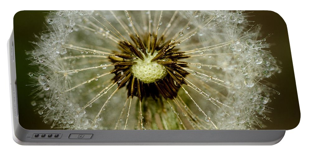 Background Portable Battery Charger featuring the photograph Dandelion by TouTouke A Y