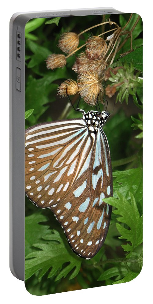 Butterfly Portable Battery Charger featuring the photograph Dark Blue Tiger Butterfly by David and Carol Kelly