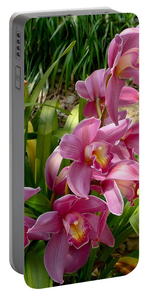 Flower Portable Battery Charger featuring the photograph Day Brighteners by Denise Mazzocco