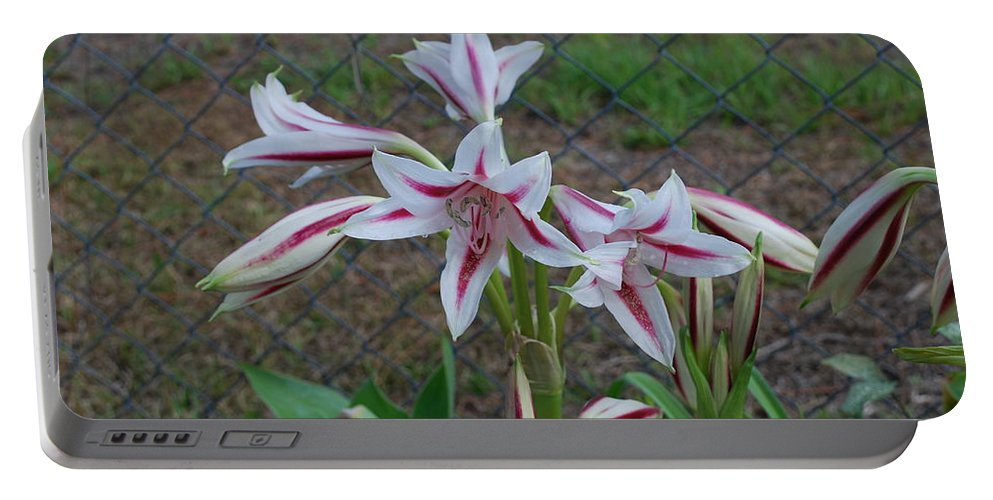 Grows Wild Portable Battery Charger featuring the photograph Day Lilly by Robert Floyd