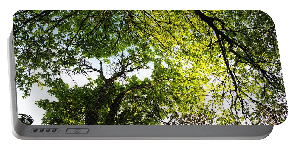 Trees Portable Battery Charger featuring the photograph Daydreaming In The Hammock by Belinda Greb