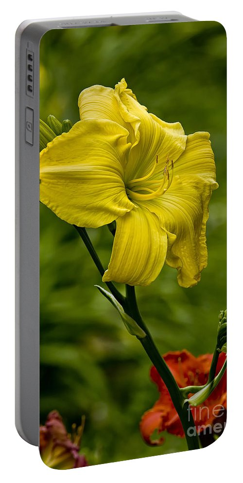 Daylily Portable Battery Charger featuring the photograph Daylily Picture 469 by World Wildlife Photography