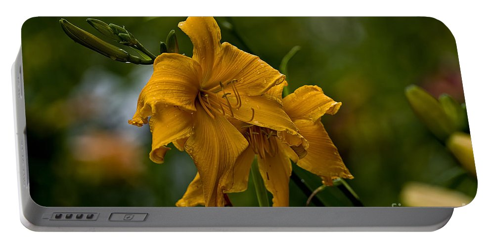 Daylily Portable Battery Charger featuring the photograph Daylily Picture 474 by World Wildlife Photography