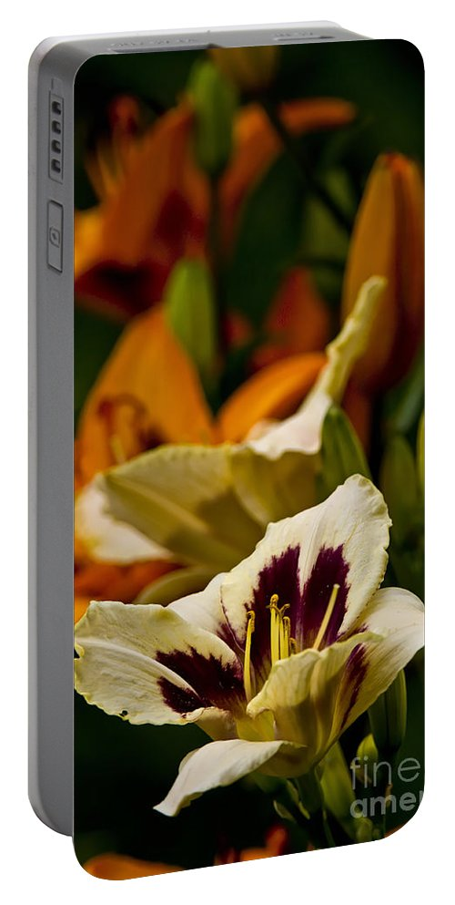 Daylily Portable Battery Charger featuring the photograph Daylily Picture 487 by World Wildlife Photography