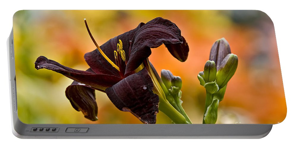 Daylily Portable Battery Charger featuring the photograph Daylily Picture 514 by World Wildlife Photography