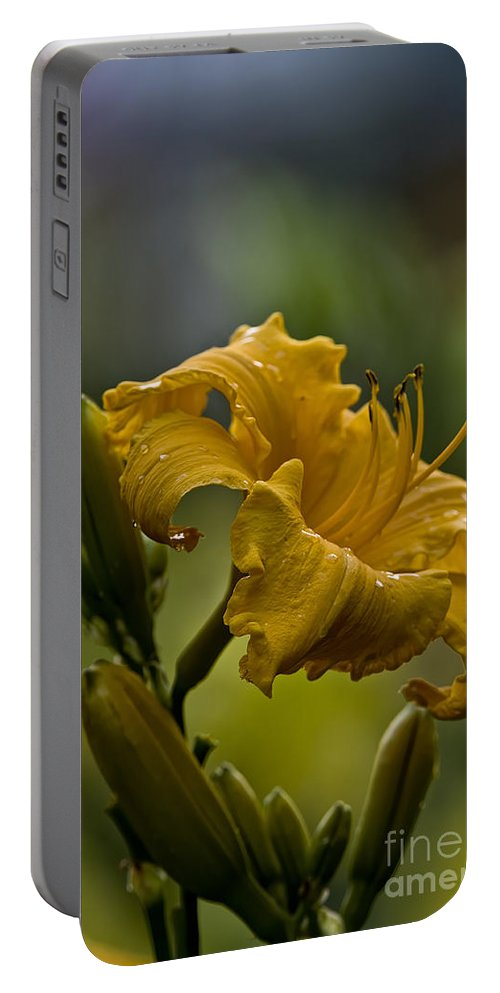 Daylily Portable Battery Charger featuring the photograph Daylily Picture 558 by World Wildlife Photography