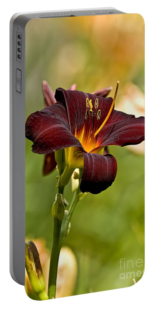 Daylily Portable Battery Charger featuring the photograph Daylily Pictures 576 by World Wildlife Photography