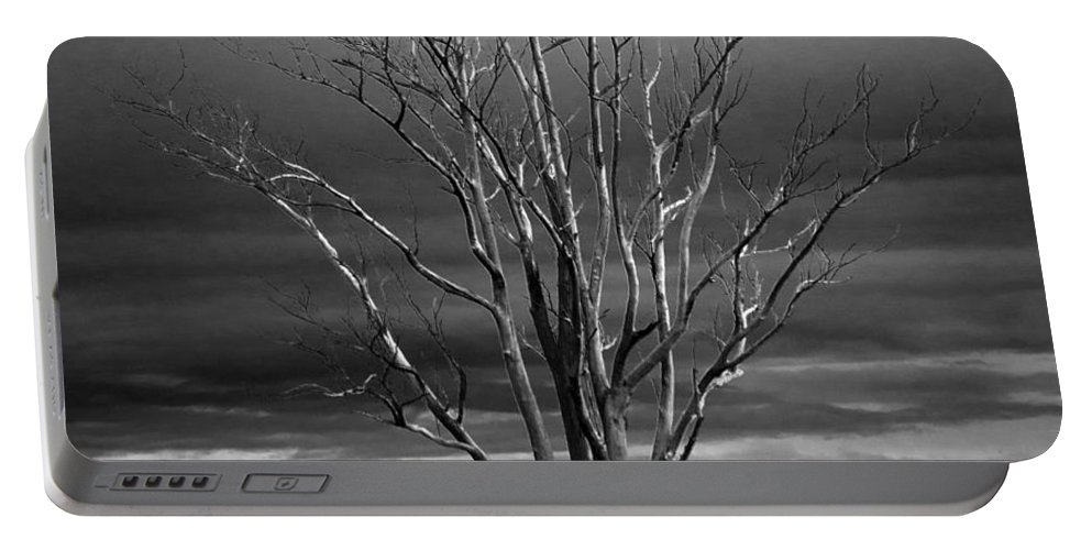 Clearing Portable Battery Charger featuring the photograph Dead Tree by FL collection