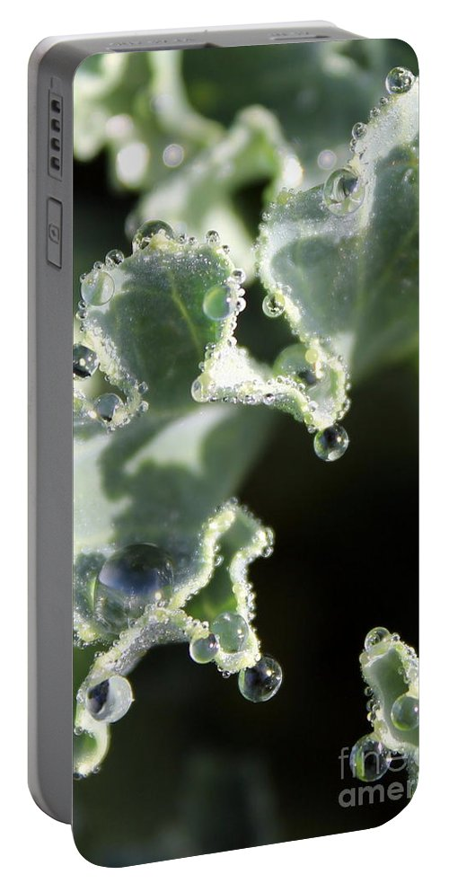 Portable Battery Charger featuring the photograph Decorative Kale With Dew by Renee Croushore