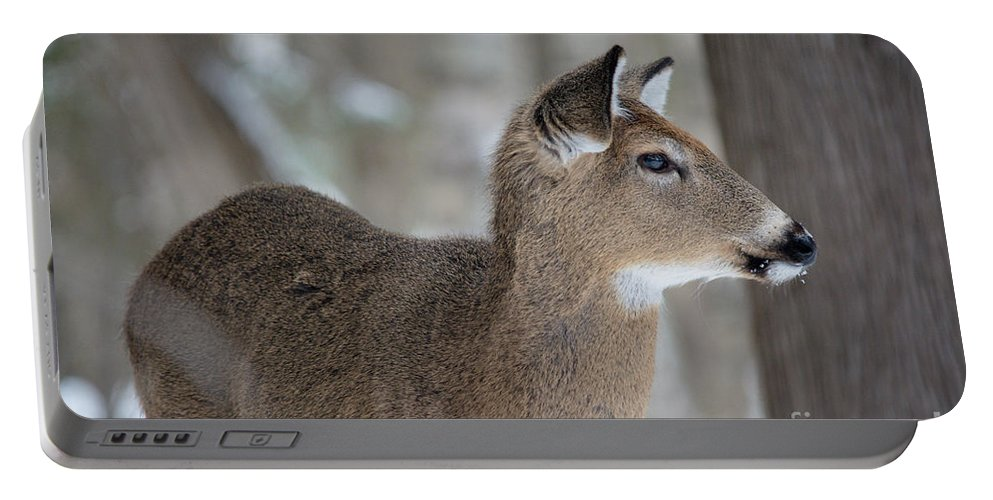 Portable Battery Charger featuring the photograph Deer Profile by Cheryl Baxter