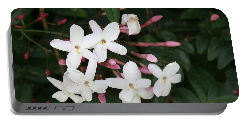 White Portable Battery Charger featuring the photograph Delicate White Jasmine Blossom With Green Background by Taiche Acrylic Art