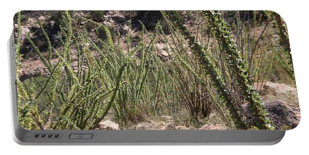 Ocotillo Portable Battery Charger featuring the photograph Desert Forest by David S Reynolds