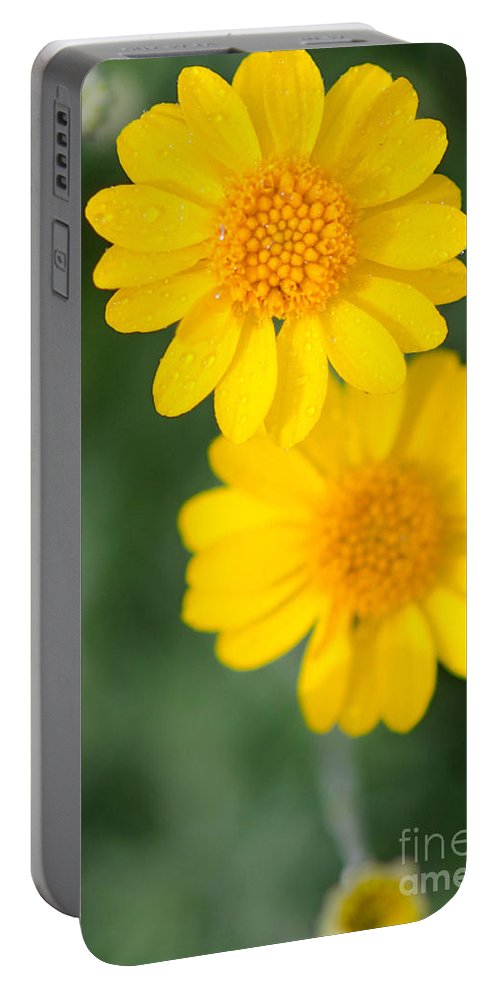 Baileya Portable Battery Charger featuring the photograph Desert Marigold Baileya Multiradiata by Michael Moriarty