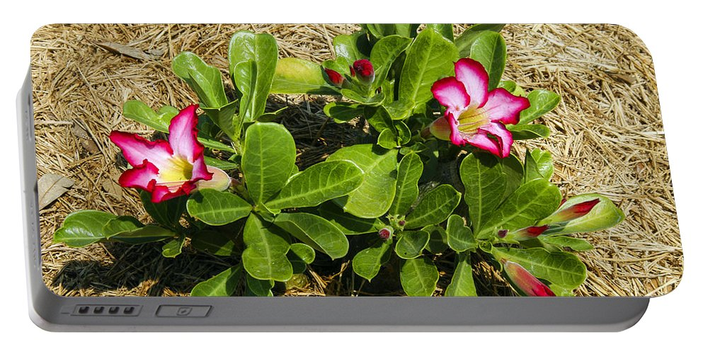 Georgetown Portable Battery Charger featuring the photograph Desert Rose by Bob Phillips
