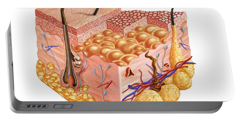 Anatomy Portable Battery Charger featuring the digital art Detailed Cutaway Diagram Of Human Skin by Leonello Calvetti