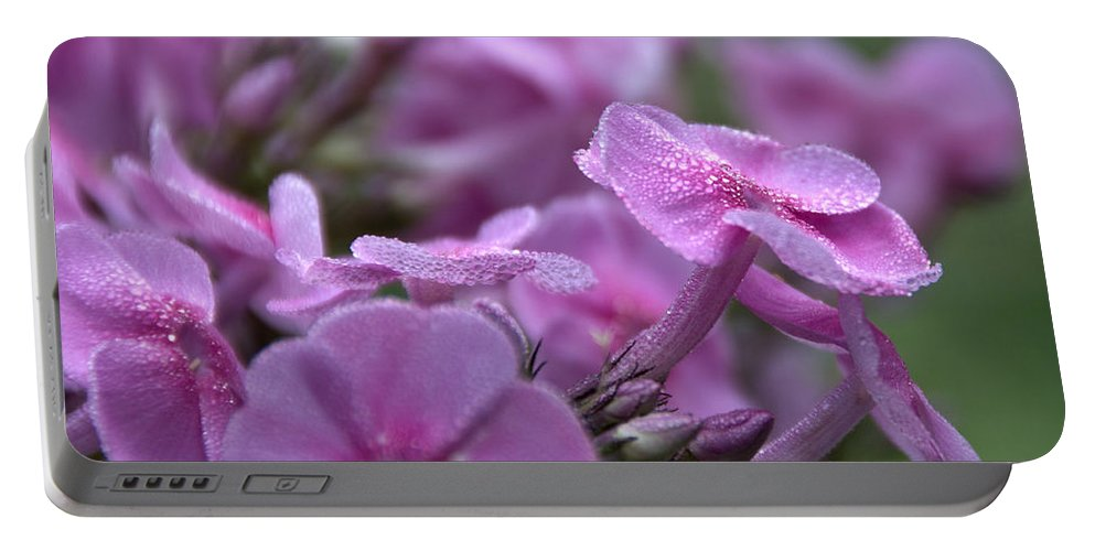 Portable Battery Charger featuring the photograph Dew On Phlox by Cheryl Baxter