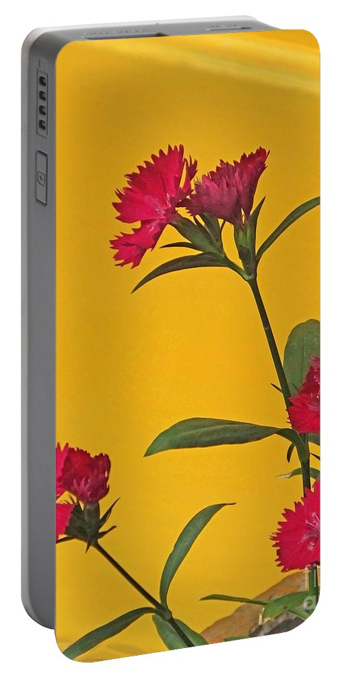 Floral Portable Battery Charger featuring the photograph Dianthus At The Door by Lizi Beard-Ward