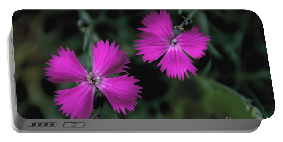 Dianthus Portable Battery Charger featuring the photograph Dianthus by William Norton