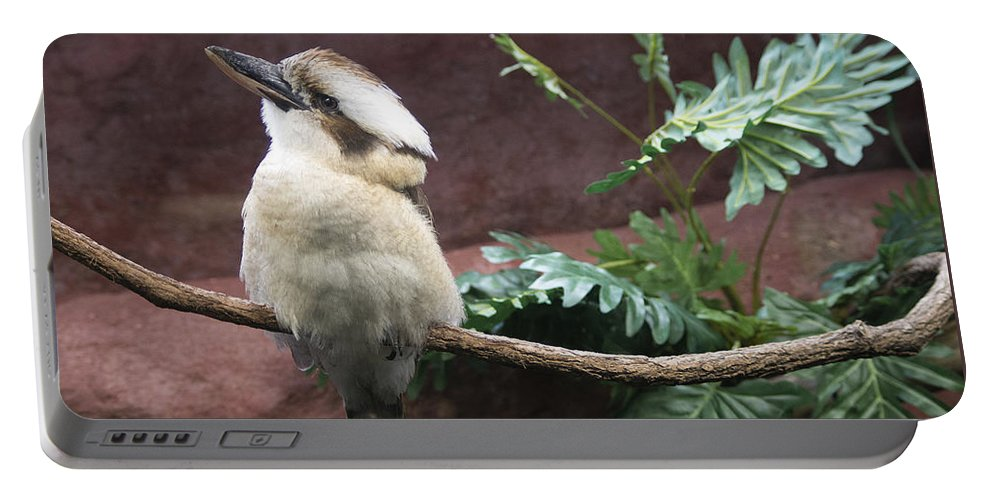 Laughing Portable Battery Charger featuring the photograph Did You See That? by John Dauer