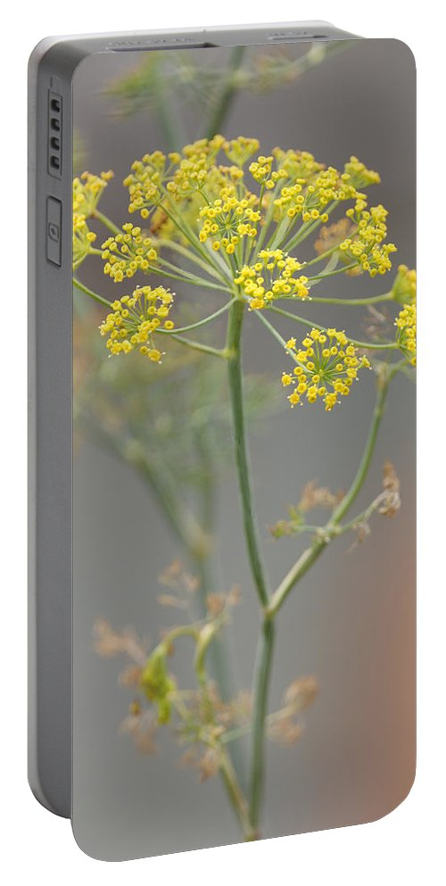 Sunlight Portable Battery Charger featuring the photograph Dill Blossom by Shirley Heyn