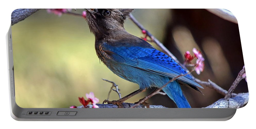 Stellers' Jay Portable Battery Charger featuring the photograph Dining Out by Ron D Johnson