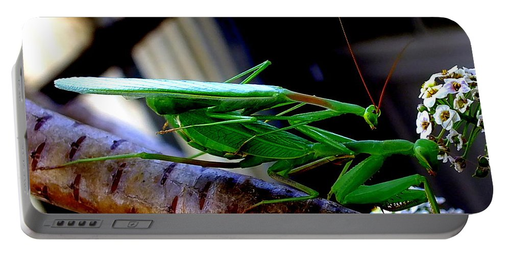 Praying Mantis Sex Male Female Cannibal Insect Bug Wing Flower Antenna Mandibles Nature Portable Battery Charger featuring the photograph Dinner For One by Guy Pettingell