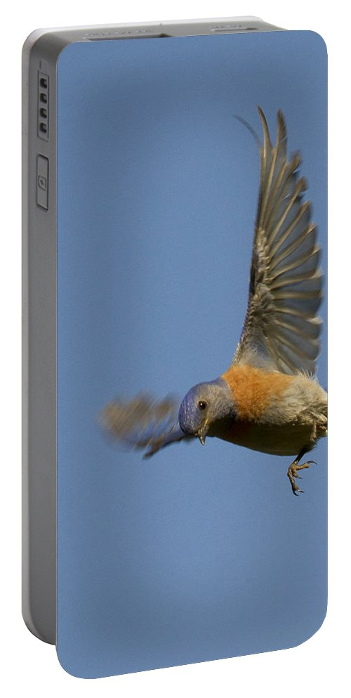 Animals Portable Battery Charger featuring the photograph Dive Bomber by Jean Noren