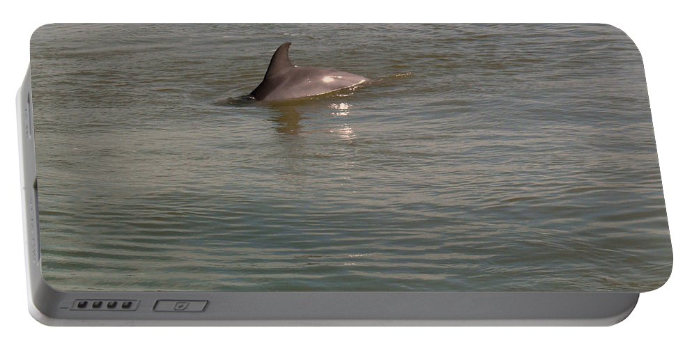 Dolphin Portable Battery Charger featuring the photograph Diving Dolphin by Robert Brown