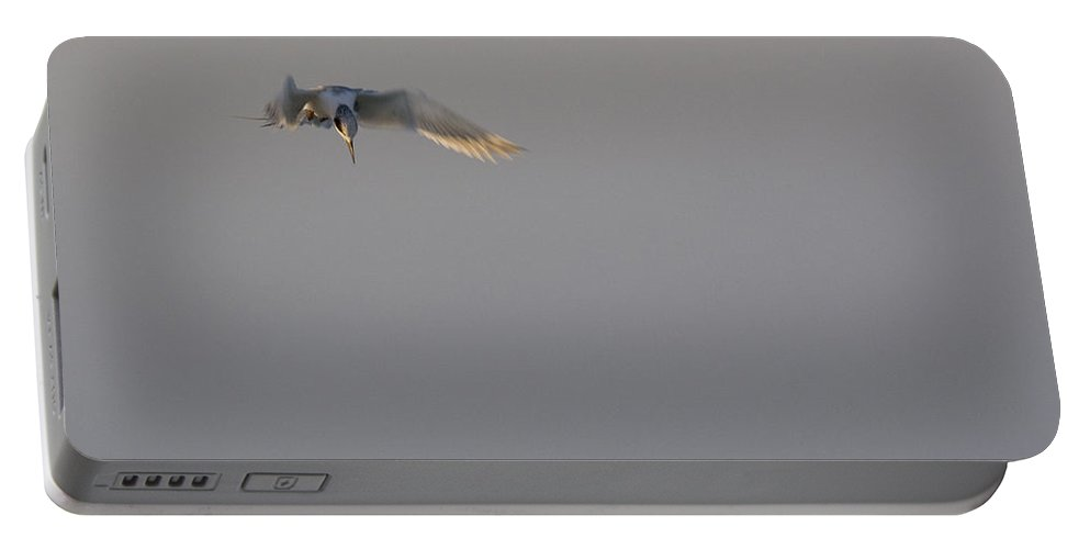 Tern Portable Battery Charger featuring the photograph Diving Tern by Sandy Swanson